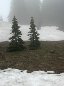 Can you find the marmot on the right? It was such a treat to observe these creatures... I'd never seen one before!