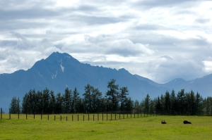 Musk Ox Farm in Matanuska Valley