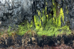 The algae and guano look like an abstract painting!